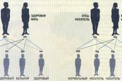 Связь между наследственностью и естественным отбором