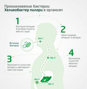 попадание хеликобактерии в желудок