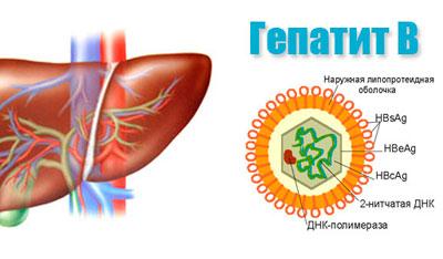Возбудитель гепатита в