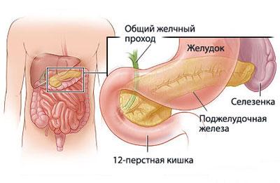 Место расположения поджелудочной железы