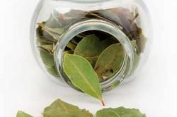 Лавровый лист при лечении остеохондроза
