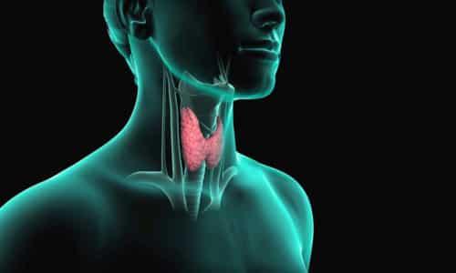 Способы, которые применяет народная медицина, улучшают работу клеток щитовидной железы (ЩЖ)