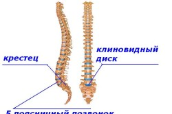 Структура пояснично-крестцового отдела позвоночника