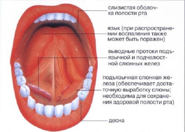 Аллергия во рту