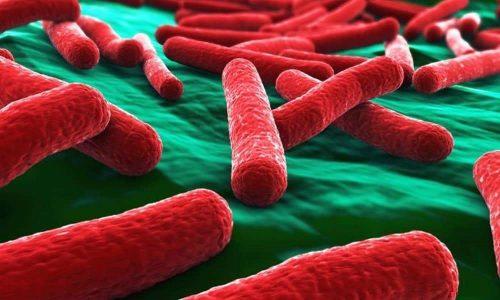 При цистите воспаление часто возникает при попадании в организм кишечной палочки