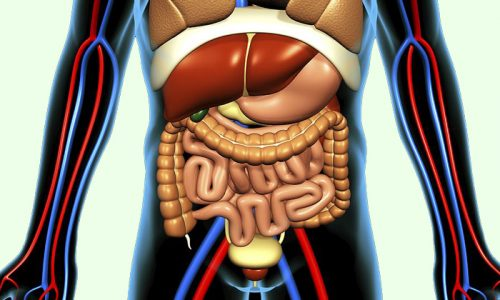 Одно из преимуществ порошка отсутствие отрицательного влияния на желудочно-кишечный тракт