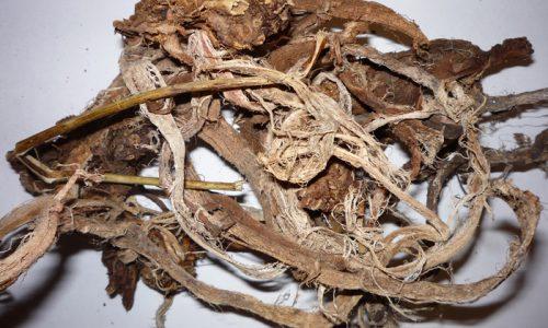 Корень алтая - натуральный антисептик, уничтожает вредоносные микробы