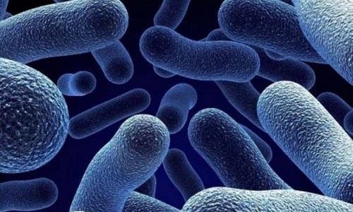 При высокой температуре в области малого таза размножение бактерий происходит более активно