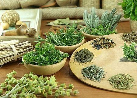 полезные и лечебные травы
