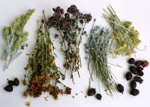 травяной сбор против  рак предстательной железы
