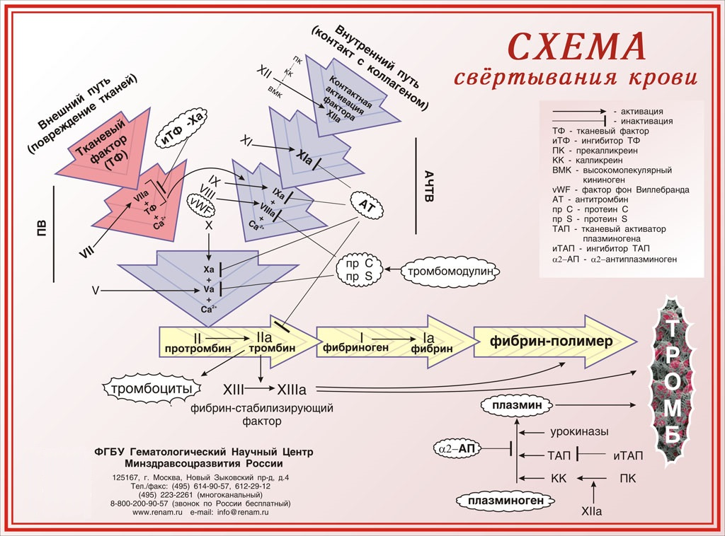 Тромбоцитарные факторы