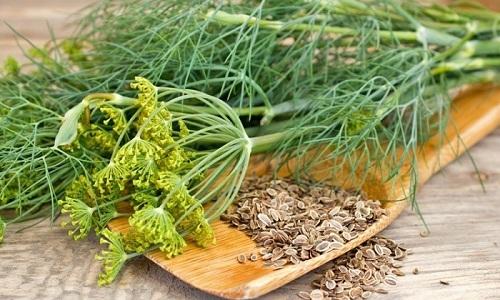 Настой семян укропа обладает мочегонным действием