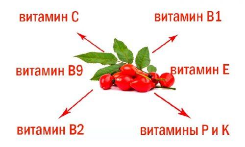 Ценные свойства шиповника обусловлены наличием в его составе большого количества полезных веществ