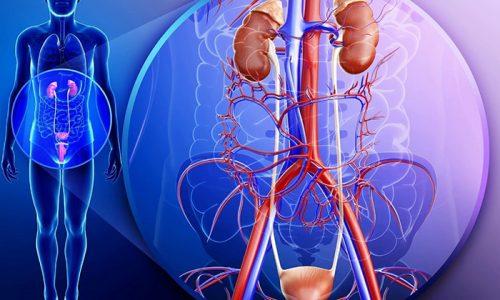 В результате переохлаждения или под влиянием снижения иммунных сил организма повышается риск развития заболеваний мочевыводящей системы